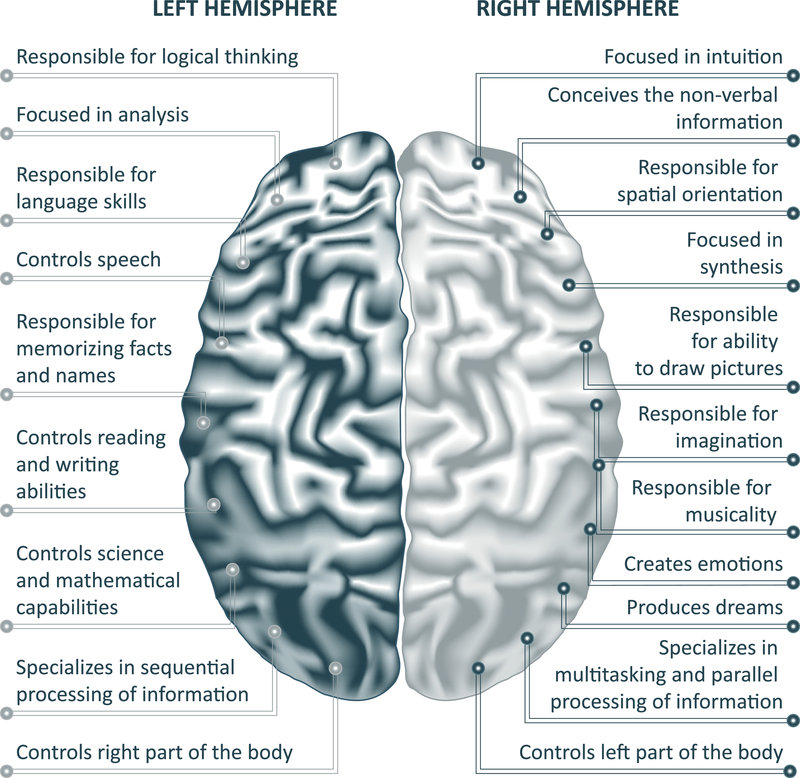 Brain left analytical and right creative hemispheres