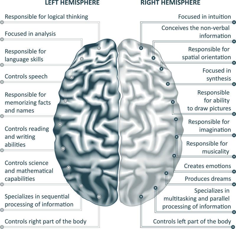 Brain left analytical and right creative hemispheres